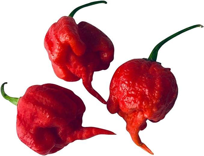Carolina Reaper Yellow Hot Pepper Organic Non-GMO 24 Seeds