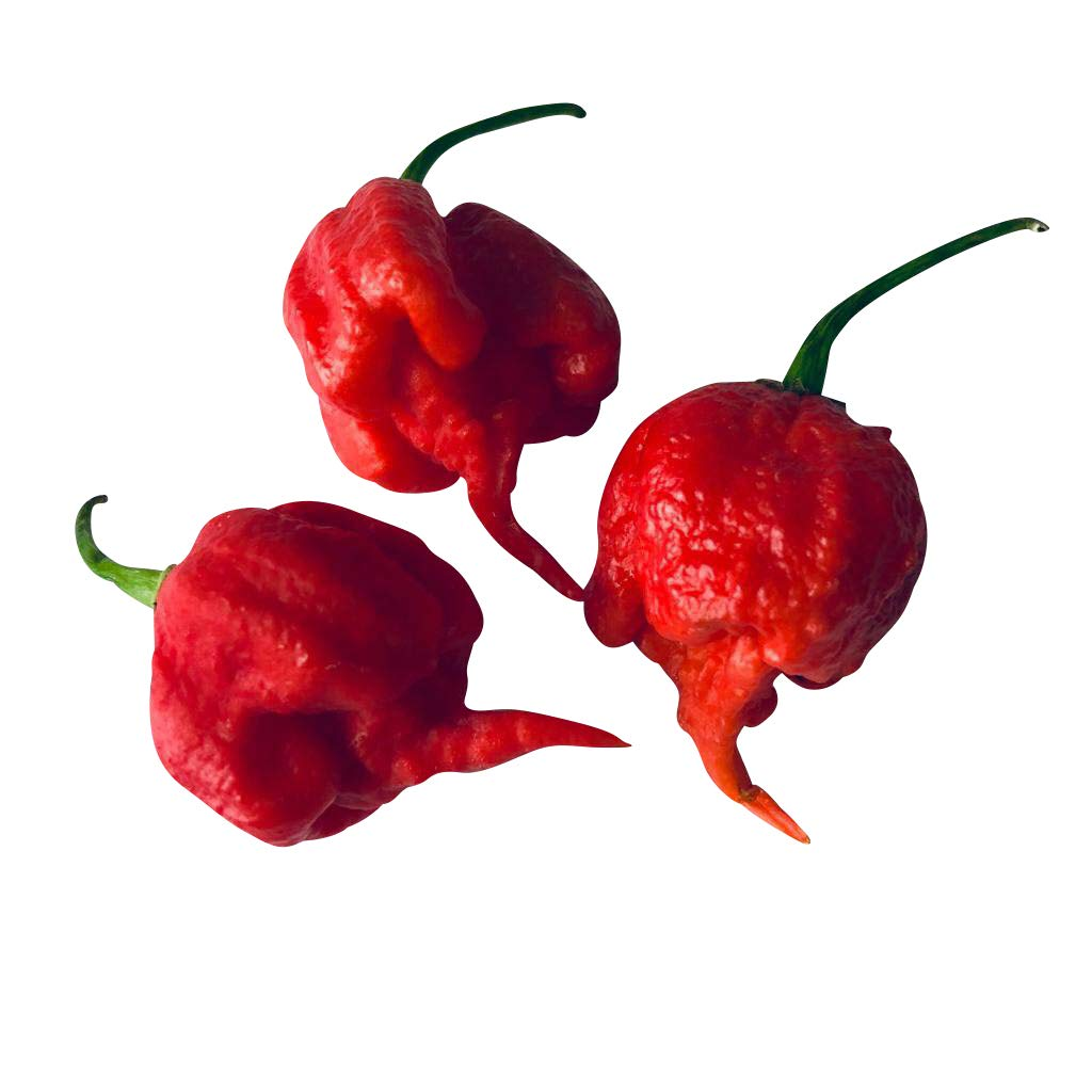 20 Seeds ''CAROLINA REAPER'' Chili -WORLD RECORD CHILLI PEPPER- OVER 2.000.000 Scoville