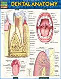 Dental Anatomy - Laminated