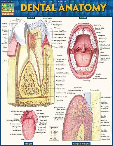 Dental Anatomy (Quick Study Academic)