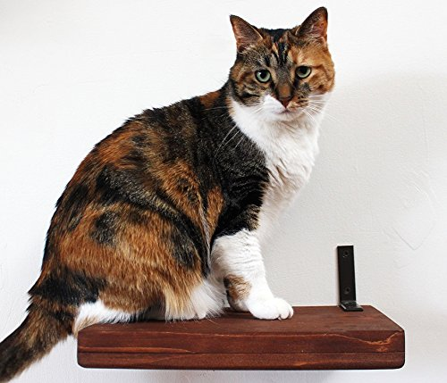 CatastrophiCreations Solid Wood Cat Shelf Handcrafted Wall-Mounted Cat Furniture, English Chestnut, 12