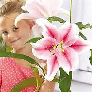 100pcs / bag siembra el envío de lirio libre barato Lily Lily Semillas de Barbados en maceta de Bonsai Semilla Balcón de flores para jardín Plantar Claro