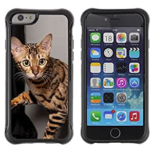 ZETECH CASES / Apple Iphone 6 / OCICAT SHORTHAIR BENGAL SAVANNAH CAT / ocicat shorthair Bengala sabana gato / Robusto Caso Carcaso Billetera Shell Armor Funda Case Cover Slim Armor