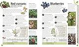 Biodynamic Gardening: Grow Healthy Plants and