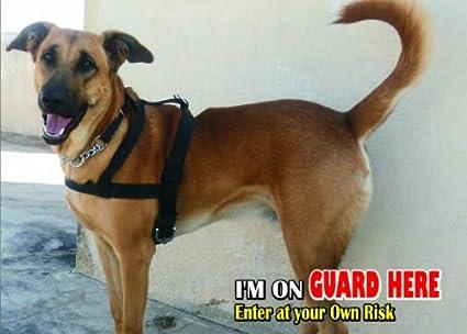 Amazon.com: Atención – Señal Cuidado con/diversión perro ...