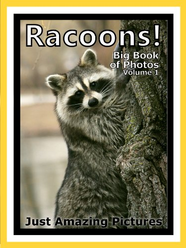 Just Racoon Photos! Big Book of Photographs & Pictures of Racoons Vol. - Picture Racoon Of