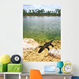 Wallmonkeys Florida Everglades American Alligator Wall Mural Peel and Stick Graphic (60 in H x 40 in W) WM360627