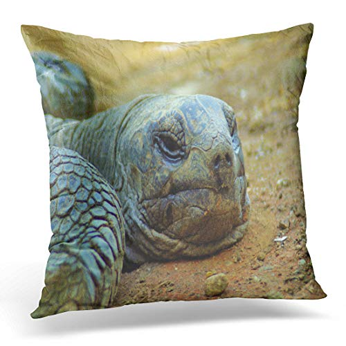 Emvency Throw Pillow Cover The Galapagos Tortoise Complex Galápagos Giant are Largest Living Decorative Pillow Case Home Decor Square 18