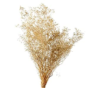 LACrafts Dried Baby's Breath Flower, Dried Gypsophila, Dried Wheat Stalks (Natural Baby's Breath)