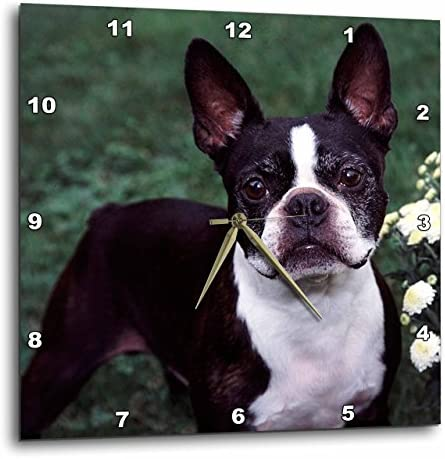 3dRose Boston Terrier Duke – Wall Clock, 10 by 10 DPP_3111_1