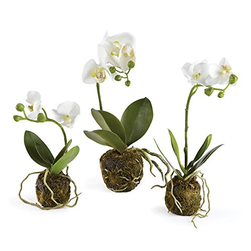 Porch & Petal DI1227 Phalaenopsis Drop-ins, Set of 3 by Porch & Petal