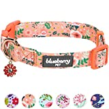 """Blueberry Pet 6 Patterns Spring Scent Inspired Garden Balsam Dog Collar in Apricot, Medium, Neck 14.5""""-20"""", Adjustable Collars for Dogs"""