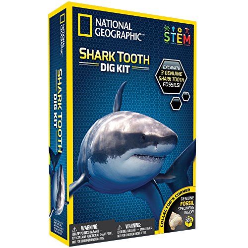 Real Shark Tooth - NATIONAL GEOGRAPHIC Shark Tooth Dig Kit