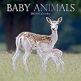 Baby Animals 2019 Calendar