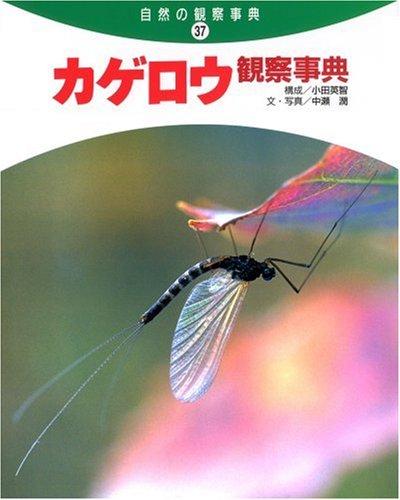(Observation encyclopedia of nature) mayfly observation encyclopedia (2006) ISBN: 4035265705 [Japanese Import] ebook