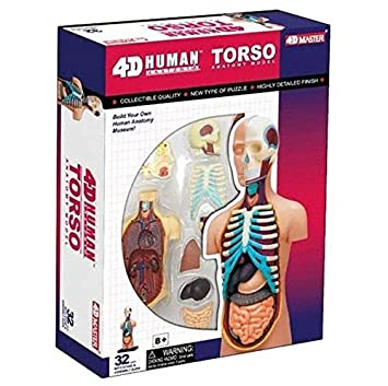 Amazon.com: 4D Puzzle Body Torso 32pcs Human Anatomy 3D Study Model ...