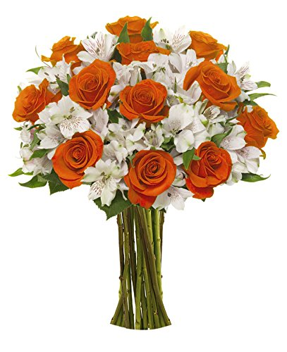 Benchmark Bouquets Dazzling Roses and Alstroemeria, No Vase