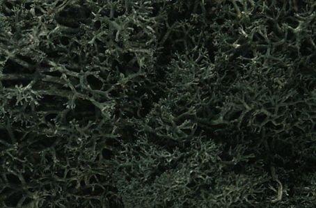 Woodland Scenics Dark Green Lichen 1:0 Scale -  L164
