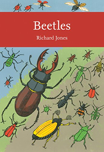 Stag beetle book