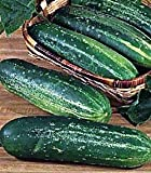 Straight Eight Cucumber 400 Seeds