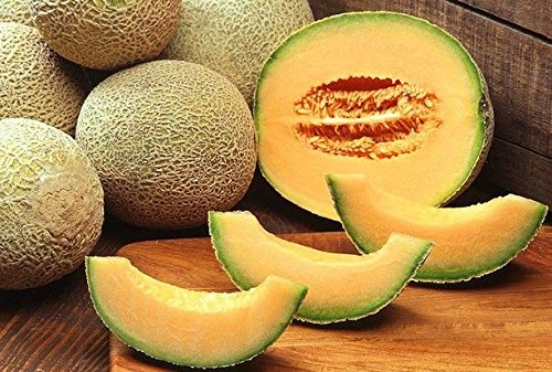 Portal Cool Vegetable Melon Cantaloupe Hearts of Gold 100 Seeds