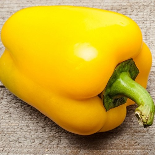 David's Garden Seeds Pepper Bell Canary SL230 (Yellow) 50 Heirloom Seeds