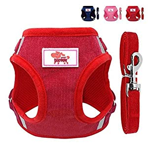 Beirui No Pull Reflective Dog Vest & Leash Set – Soft Harness for Small Medium Dogs & Cats – Comfort Step-in Mesh Padded… Click on image for further info.