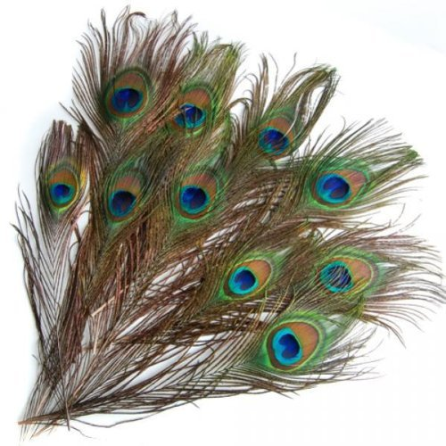 20Pcs Peacock Pattern Feathers Mask Hat Craft Decoration 9-13 Inches Generic