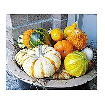Seeds Vegetable Cucurbita Pepo Decorative Mixture from Ukraine 1 Gram : Garden & Outdoor