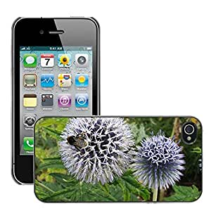 Just Phone Cases Slim Protector Hard Shell Cover Case // M00128012 Globe Thistle Bee Flower Insect // Apple iPhone 4 4S 4G