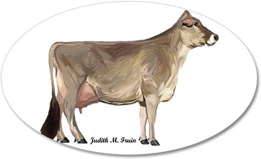 Got Brown Swiss Sticker Decal cattle cows dairy 2