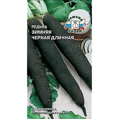 Russian Radish Winter Black Long. MF 1 : Garden & Outdoor