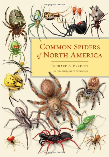 common-spiders-of-north-america