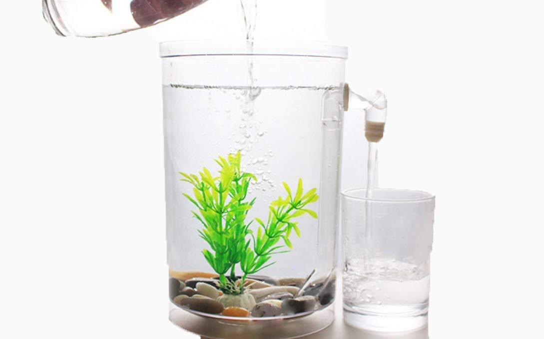 Auto-Limpieza De Escritorio Mini Plástico Creativo Ecológico Agua Libre Tanque De Pez De Colores Tanque De Peces Pequeño Acuario: Amazon.es: Hogar