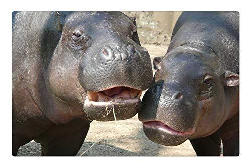 Tree26 Indoor Floor Rug/Mat (23.6 x 15.7 Inch) - Hippo Zoo Hippopotamus River Horse Animal
