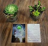 Succulent Planter Soil Kit - Total DIY Terrarium