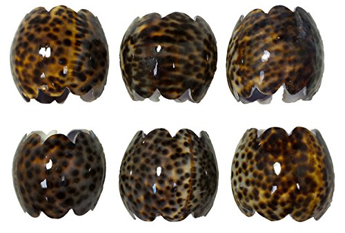 U.S. Shell Tiger Cowrie Napkin Ring, Large