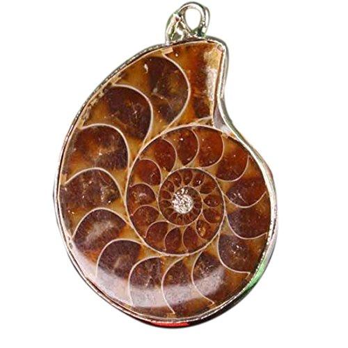 Nautilus Pendant Light