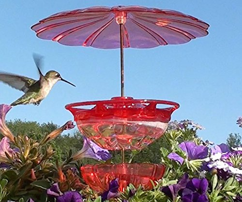 Blossom Hummingbird Hanging Feeder (Aspects ASPECTS436 Humm Blossom Accessory Kit)