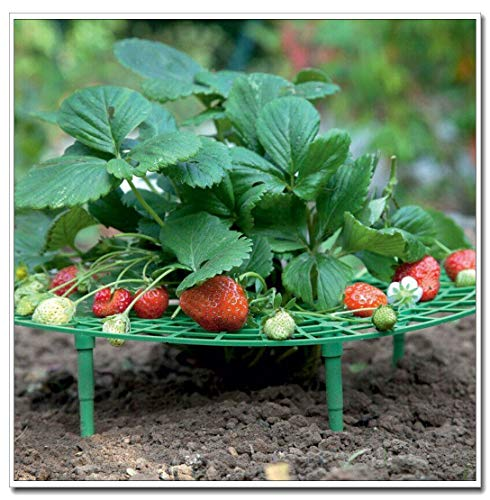 cnnIUHA Upgraded Plant Cradle Rack,5Pcs Strawberry Plant Growing Support,Handy Strawberry Supports for Your Garden,Keep Strawberries Off Rot in The Rainy Days