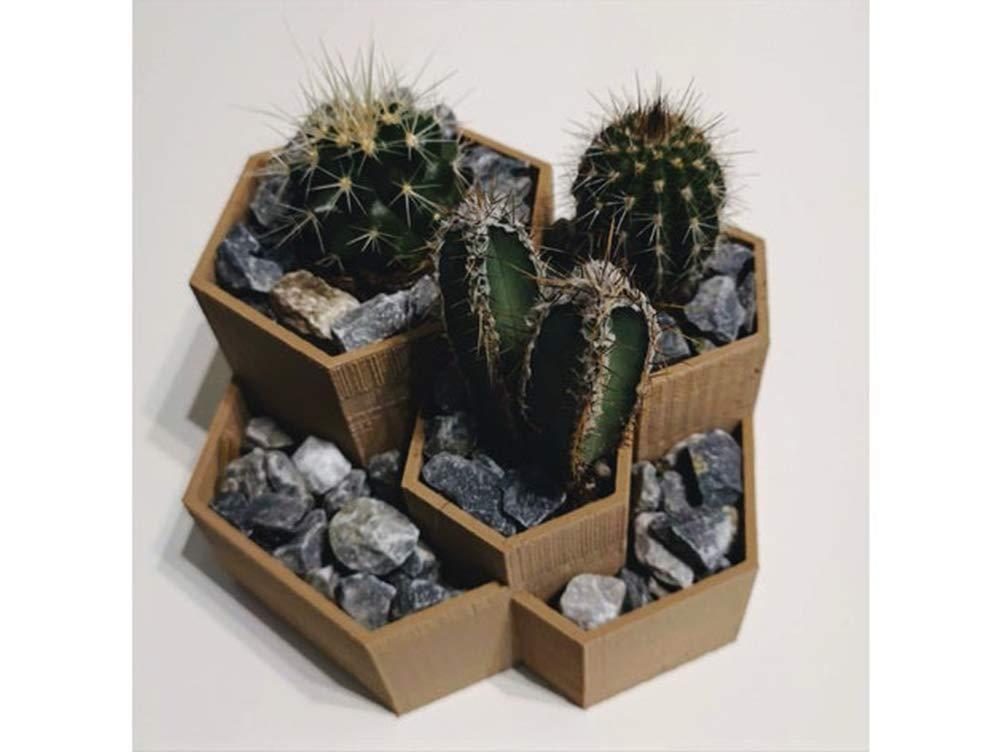HexaCactus Planter Pot Hand-Made Succulent Flowers Honey Decoration 3D Printed 12 Colors
