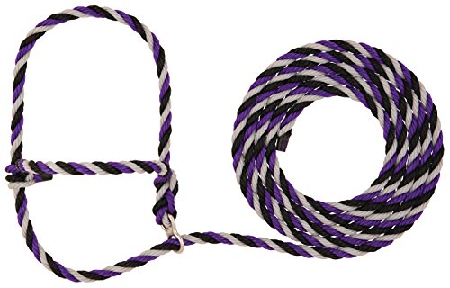Weaver Leather Livestock Stierwalt Breaking Halter, Purple/Black/Gray