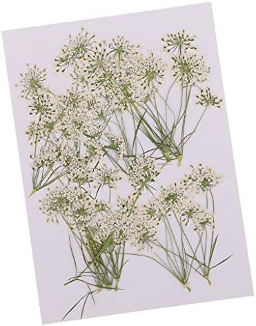 乾燥した花 押し花 レースの花 乾燥した 花 本物 カード作り DIY工芸品 10個入り