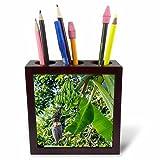 3dRose Danita Delimont - Food - Hanalei, Hawaii, Kauai, green banana on tree - 5 inch tile pen holder (ph_278941_1)