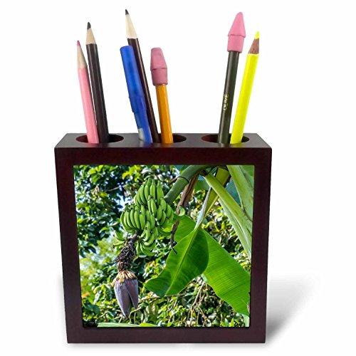 3dRose Danita Delimont - Food - Hanalei, Hawaii, Kauai, green banana on tree - 5 inch tile pen holder (ph_278941_1) by 3dRose