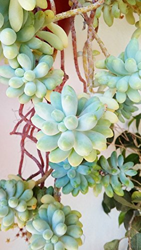 Home Comforts Acrylic Face Mounted Prints Gross Floor Succulent Plant Plant Succulent Print 20 x 16. Worry Free Wall Installation - Shadow Mount is Included. (Quick Shadow Mount)