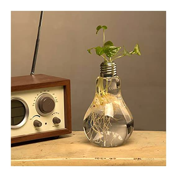 Ivolador Lightbulb Glass Flower Planter Vase Terrarium Container Perfect for Propagating Hydroponic Plants Home Office Garden Wedding Decoration - Retro and Simple Lightbulb shape ! It helps beautify and purify your house or office, a good decoration for you It will be more beautiful and eye-catching if you put some cobbles or flowers into it when a expression of love,dating,a party, a birthday party, a wedding;Some restaurants use it for drink-- An interesting and beautiful drink. A hole on the top. Easy to plant. - vases, kitchen-dining-room-decor, kitchen-dining-room - 51Qzm%2ByqgqL. SS570  -