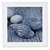 3dRose Andrea Haase Nature Photography - Pretty Blue Shell And Pebble On Driftwood - 20x20 inch quilt square (qs_276238_8)