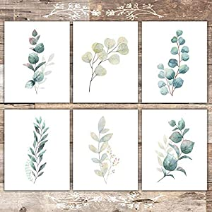 Botanical Prints Wall Art – Eucalyptus Leaves – (Set of 6) – Unframed – 8x10s