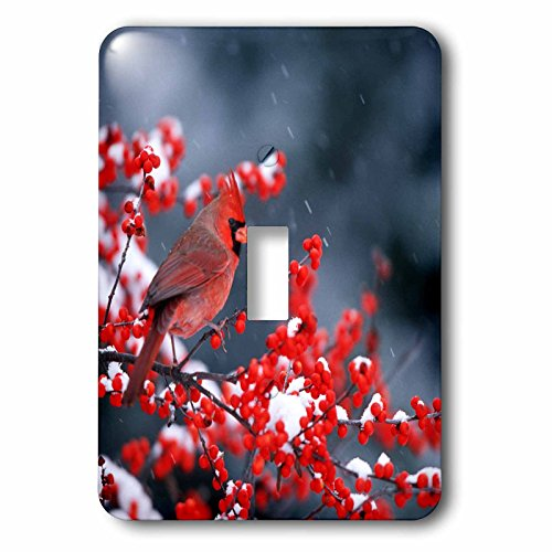 3dRose Danita Delimont - Cardinal - Northern Cardinal male in Common Winterberry in winter - Light Switch Covers - single toggle switch (lsp_250942_1)